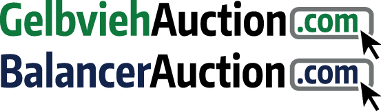 Auction Site for Gelbvieh and Balancer Cattle